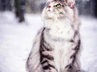 к чему снится кошка, сонник кошка