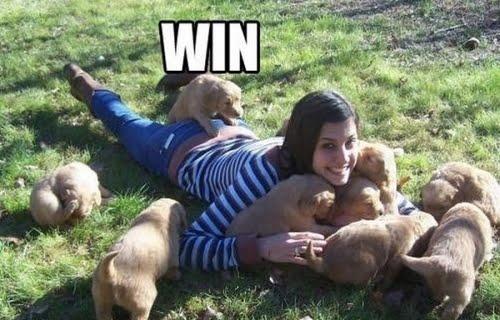 twitter-gracioso-perro