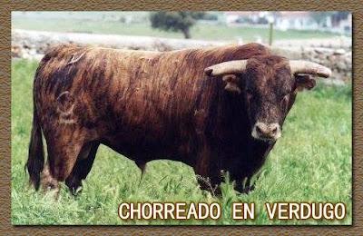 Diferentes razas de toros - Página 5 12088259_834787359972034_5323429104472681882_n