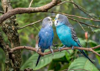 animal birds also do the sensation
