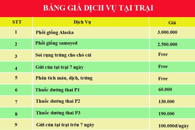 Bảng giá các dịch vụ khác tại PôPô Samoyed