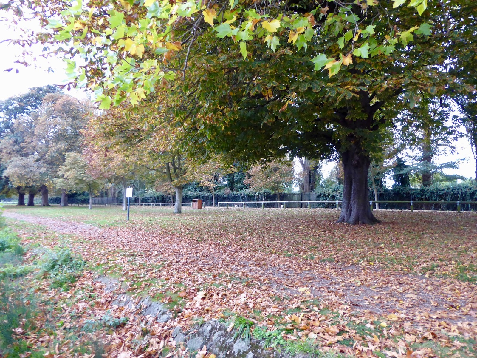 Autumn Is Definitely Upon Us As We Take A Walk In Home Park