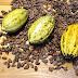 Cara Mudah Membersihkan Biji Kakao Agar Cepat Kering