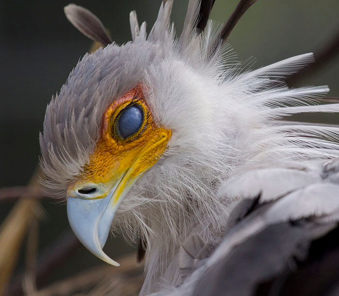 Breathtakingly Beautiful Secretary Bird That Could Become A Character In A Pixar Movie