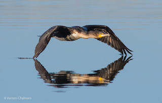 Birds in Flight / Action Photography Workshop - Cape Town
