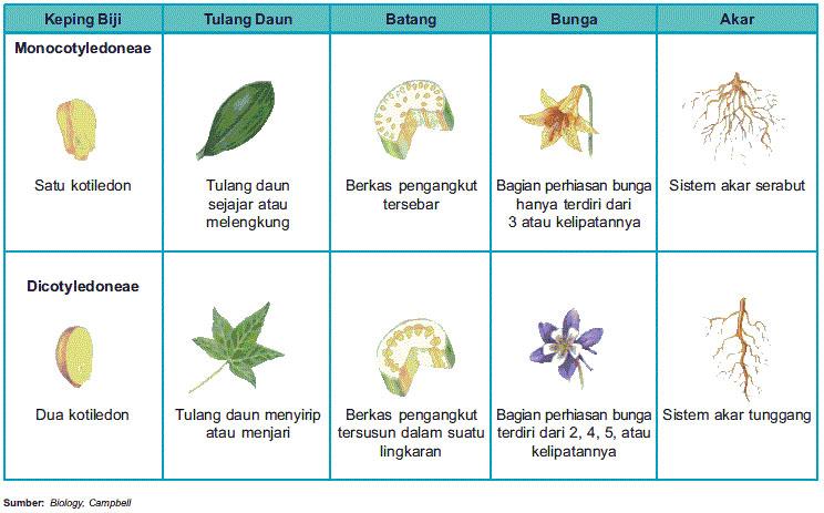 Ciri Dan Perbedaan Tumbuhan Monokotil Dan Dikotil Terlengkap