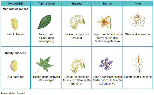 Perbedaan tumbuhan monokotil dan dikotil