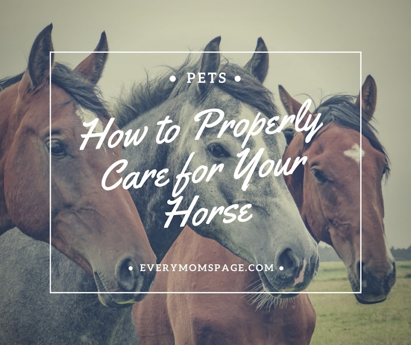 How to Properly Care for Your Horse