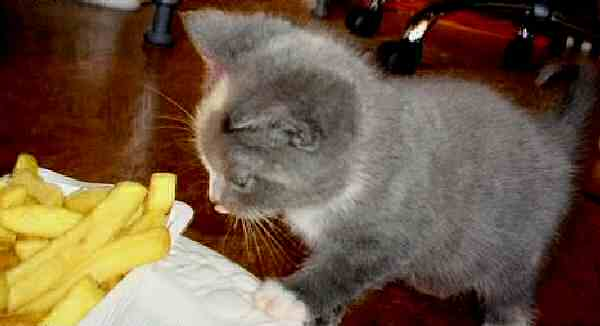 Cats Eating French Fries