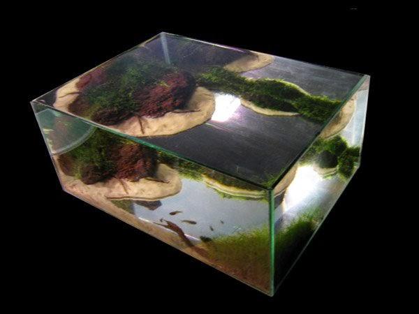 Hồ thủy sinh hiệu ứng ao - Góc nhìn nghệ thuật