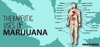 #Health,#Science : Everything you wanted to know about marijuana ! (new study )