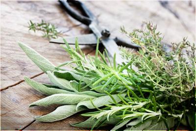أفضل 7 أعشاب للحصول على بشرة صحية