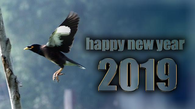 wish you happy new year 2019