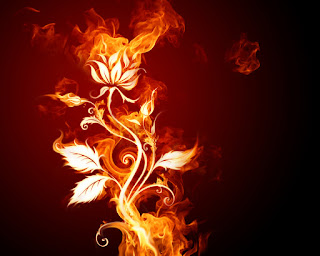 Amazing flowers fire wallpapers