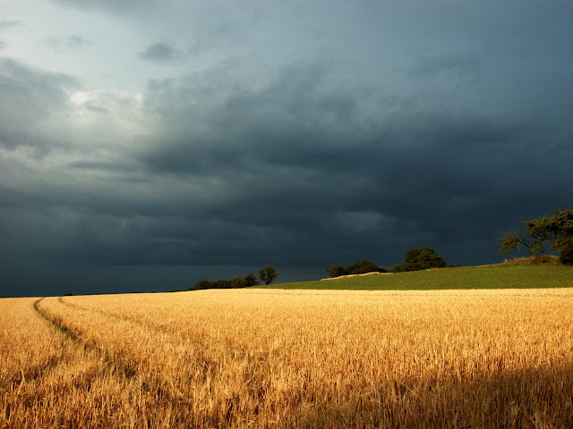 grain field thunderstorm nature peace mind