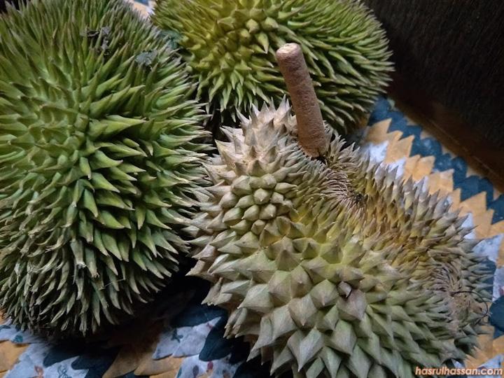 Beza buah Durian Hutan dengan buah Durian D2