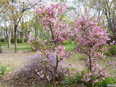 ピンクと群青色の花