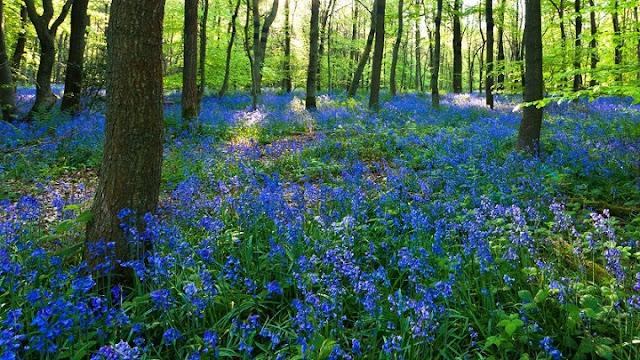 Dean Forest, Gloucestershire, Inglaterra