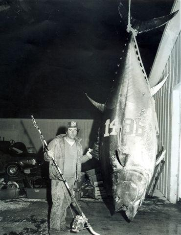 Big Fishes of the World: TUNA BLUEFIN (Thunnus thynnus)
