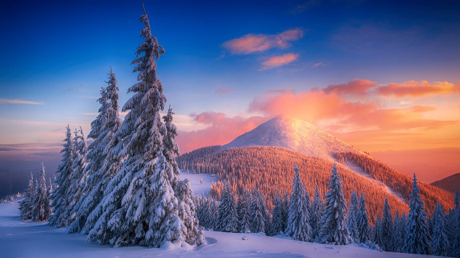 Snowy Pine Trees Mountains Nature Scenery 4k Wallpaper 4 2337