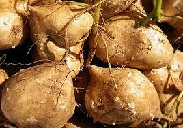 atau biasa disebut juga dengan nama bengkoang ialah tumbuhan umbi Bengkuang (Pachyrhizus erosus)