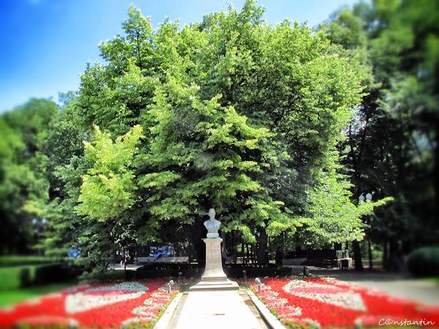 Teiul lui Eminescu - Parcul Copou - Iasi - blogul FOTO-IDEEA