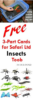 FREE Safari Ltd Insect Toob Printable 3-Part Cards from In Our Pond