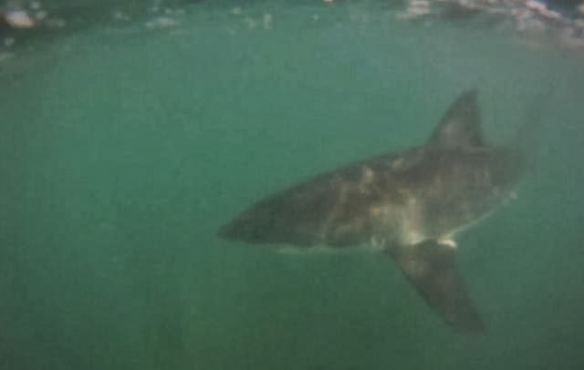 Me my Shark and I