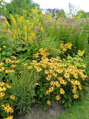 Ligularia Rudbeckia Joe Pye Weed late summer blooms at Toronto Botanical Garden by garden muses-not another Toronto gardening blog