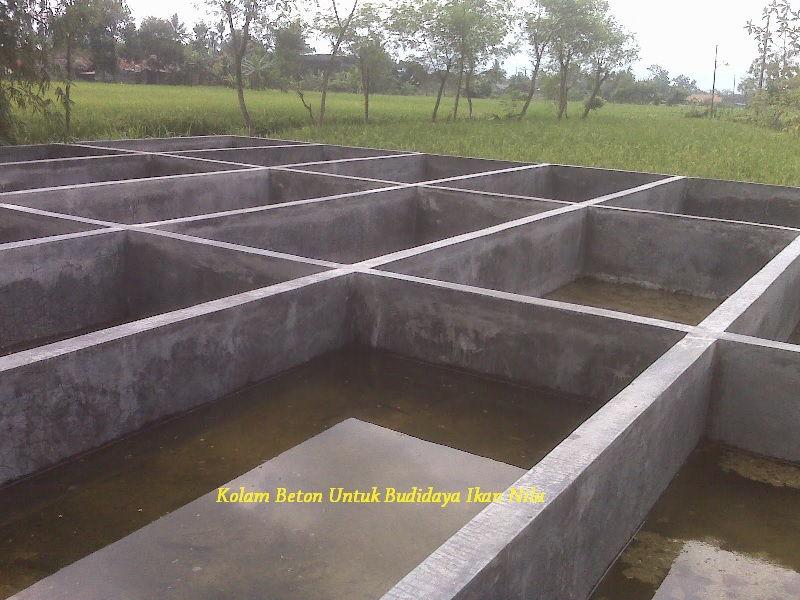 Gambar Kelebihan Kolam Beton Untuk Budidaya Ikan Nila