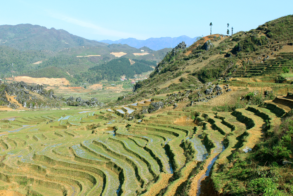 Sapa rice fields, Vietnam - travel blog