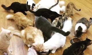 Punca 'House of Cat' Ditutup Selepas 4 Tahun Dibuka