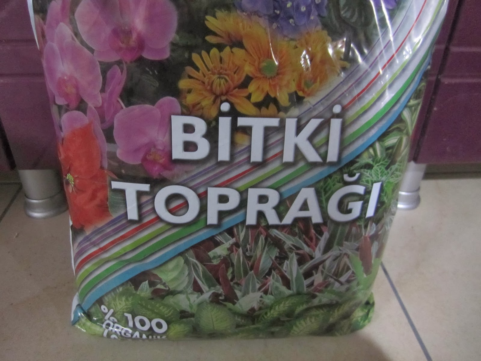 Organik yeşil soğan yetiştirmek