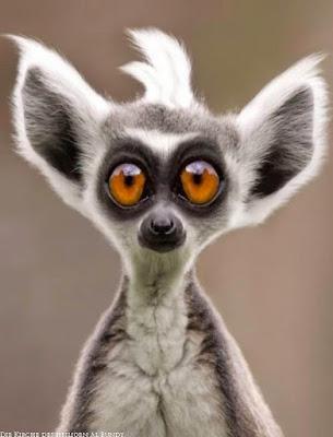 große Augen machen Witziges Tier Bild