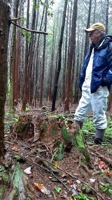 Atlantic White Cedar conservation restoration reforestation New Jersey Pine Barrens ecosystem