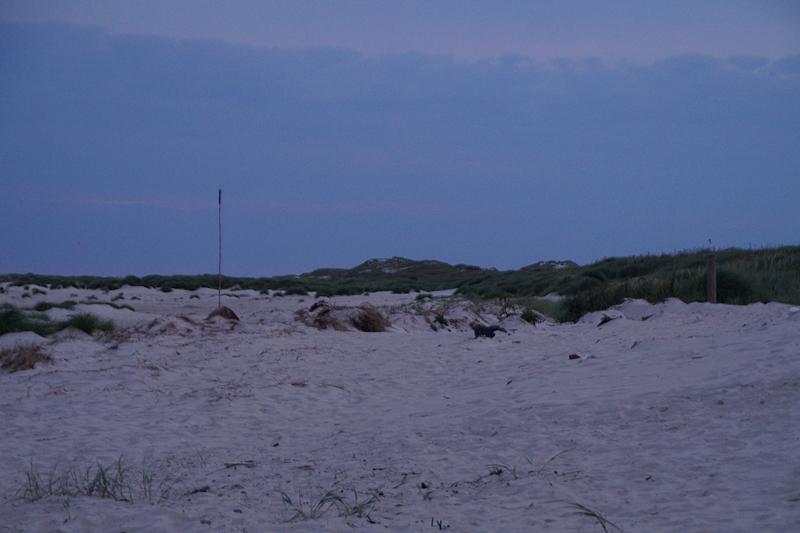 Strand Wittdün Abend/ Nacht