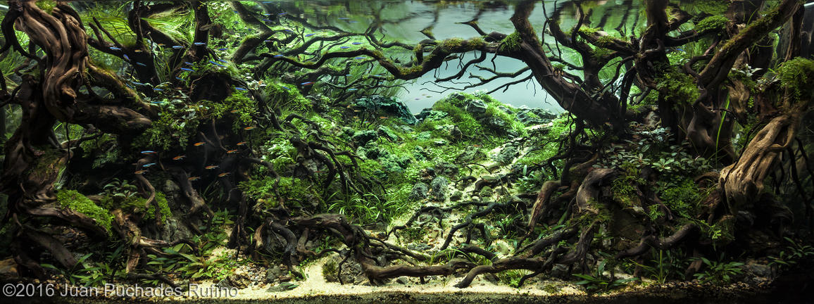 Attractive 2016 AGA Aquascaping Contest Results