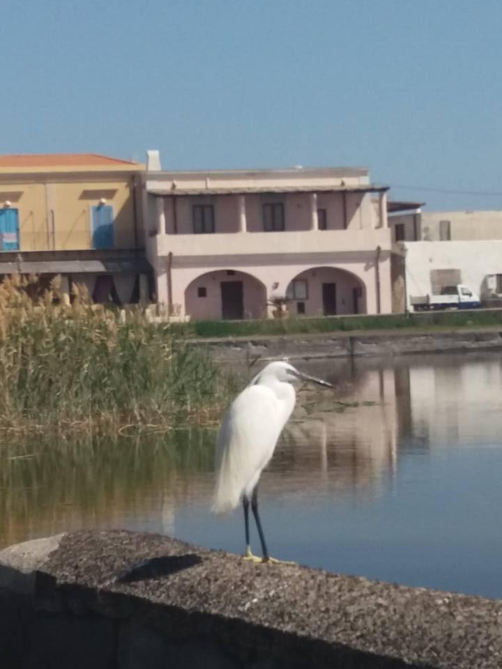 Presenze inusuali nel laghetto di lingua foto sonia for La casa nel laghetto