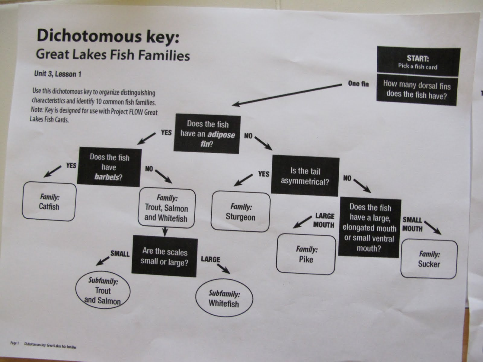 It S A Boy S Life Fish Classification And The Dichotomous Key