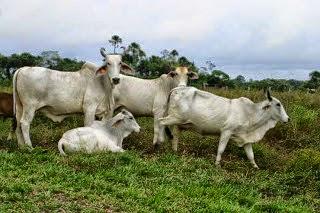 ये गोमूत्र अर्क दूध से भी मंहगा है - Gomutr Dudh Se Mahnga