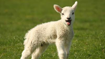 agnello-pasquale