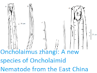 https://sciencythoughts.blogspot.com/2017/09/oncholaimus-zhangi-new-species-of.html
