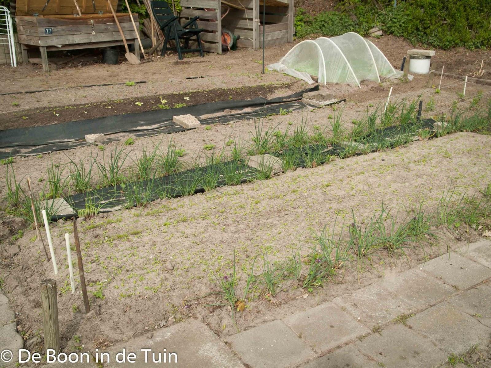 wortels bosui zaailingen lente april