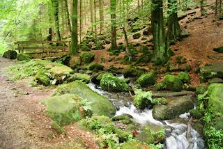 Ein naturbelassener Bach fliest durch einen Wald, darüber führt eine Brücke
