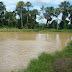 Produtores de Gurupá abandonam exploração ilegal de madeira e passam a lucrar 100% com piscicultura