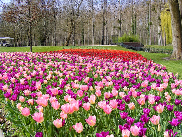 Tulips at the Chateau of Cheverny. Loir et Cher. France. Photographed by Susan Walter. Tour the Loire Valley with a classic car and a private guide.