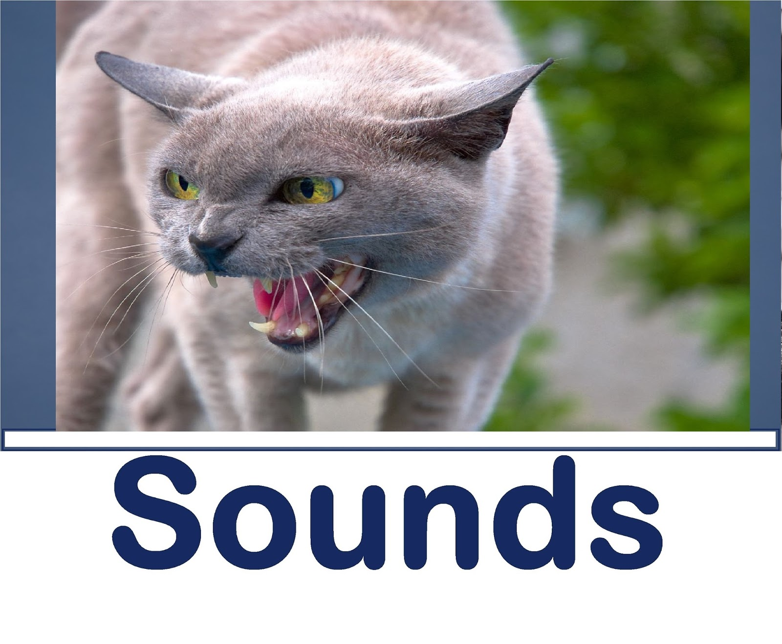 All Sound Effects Cat Sound Effects
