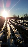 Winter Chile Stevia Projekt investieren Rendite Darlehen GmbH 2012