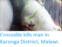 http://sciencythoughts.blogspot.co.uk/2017/12/crocodile-kills-man-in-karonga.html