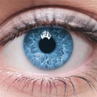 Gözün Kısımları Nelerdir? Görme Olayı Nasıl Gerçekleşir?